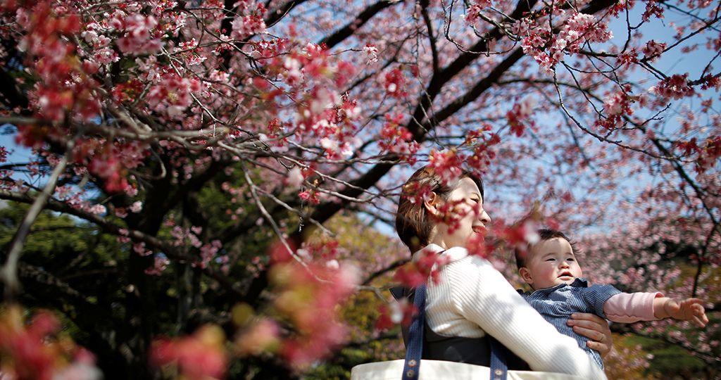 cerejeiras-2